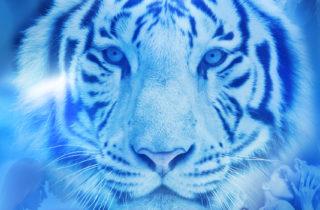 Tiger's Memory